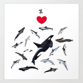 I love dolphins Art Print