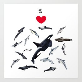 I love dolphins Art Print