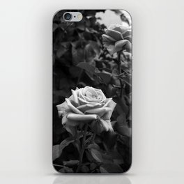 Pink Roses in Anzures 5 B&W iPhone Skin