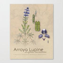 Arroyo Lupine Canvas Print