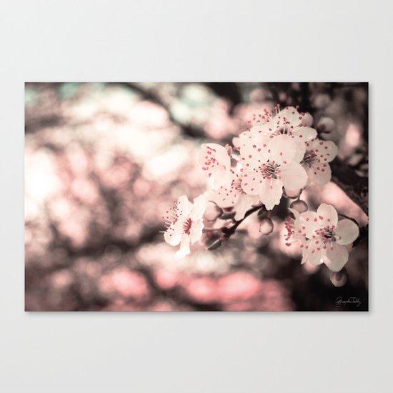 Sweet Spring (White Cherry Blossom) Canvas Print