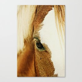 Fly In The Eye Canvas Print