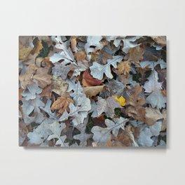 oak potpourri Metal Print