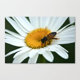 Flower Visitor Canvas Print