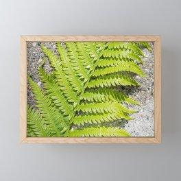Fern 7 Framed Mini Art Print