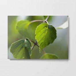Birch Leaves II Metal Print
