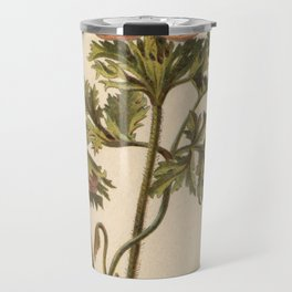 1800s Encyclopedia Lithograph of Anemone Flower Travel Mug