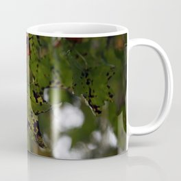 Fall Leaves in North Carolina Coffee Mug