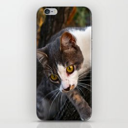 Cat on the Tree iPhone Skin