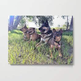 Dog Day Afternoon Metal Print