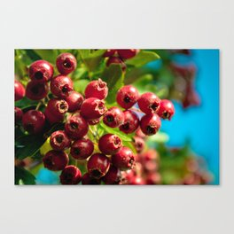 Red Summer Canvas Print