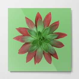The Nature of Things Two #succulent Metal Print