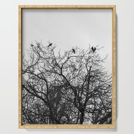 A murder of crows sitting in a tree Serving Tray
