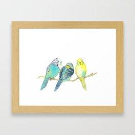 budgie family watercolor Framed Art Print