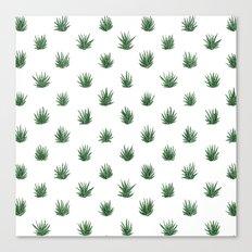 Haworthia Succulents Canvas Print