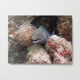 Moray Eel Metal Print