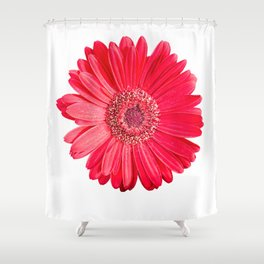 isolated red gerbera daisy on white Shower Curtain