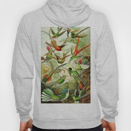 Kunstformen der Natur (Art Forms in Nature)a book of lithographic and halftones. Hummingbirds Hoody