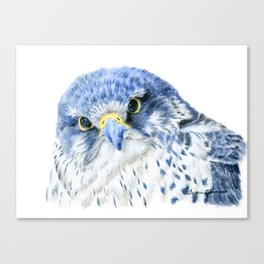 """""""Here's Looking At You"""" painting of a Gyrfalcon by Teresa Thompson Canvas Print"""