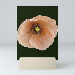 Papaver atlanticum (Peach Colored Poppy) Mini Art Print