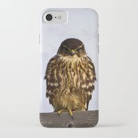 merlin iPhone & iPod Cases featuring Merlin Falcon by Photography By MsJudi