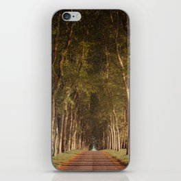 Warm French Tree Lined Country Lane iPhone Skin