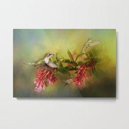 Humming Bird Paradise Metal Print