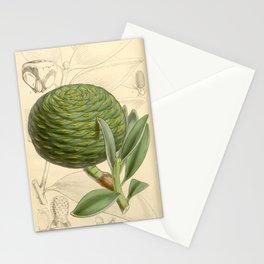 Flower 5359 dammara orientalis Dammara or Amboyna Pitch Pine1 Stationery Cards