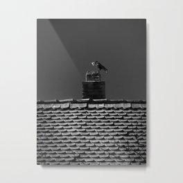 The hungry crow Metal Print