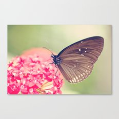 Spotted Black Crow Butterfly Canvas Print