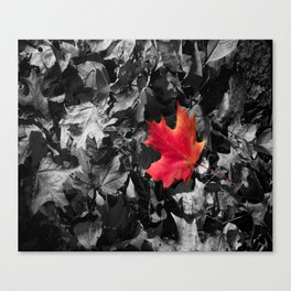 Singled Out Red Maple Leaf Canvas Print