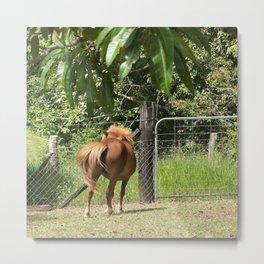 Beautiful miniature horse mare Metal Print