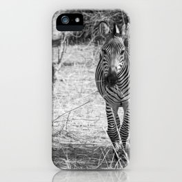 Zebra on Safari iPhone Case