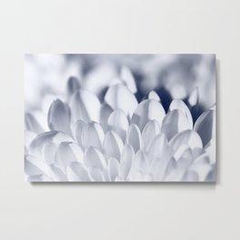 White Chrysanthemum petal flower Metal Print