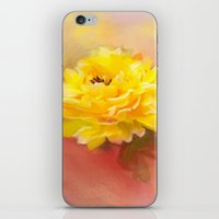 dahlia iPhone & iPod Skins featuring Dahlia by Mary Timman