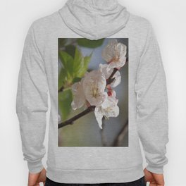 Apricot Tree Bloom Hoody