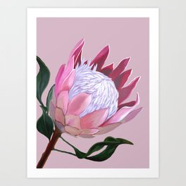 King Protea I Art Print