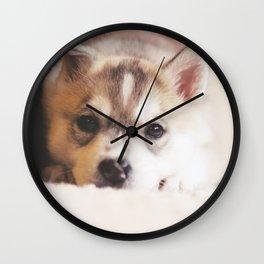 "siberian husky puppy - ""nova"" Wall Clock"