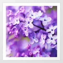 Watercolor Lilac Blossoms Art Print