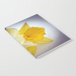 Daffodils resting in the snow after a late London snowstorm in March Notebook