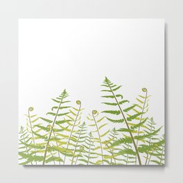 Ferns and Fiddleheads Metal Print