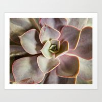 succulent Art Prints featuring succulent by Bonnie Jakobsen-Martin