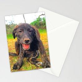 Precious Puppy Stationery Cards