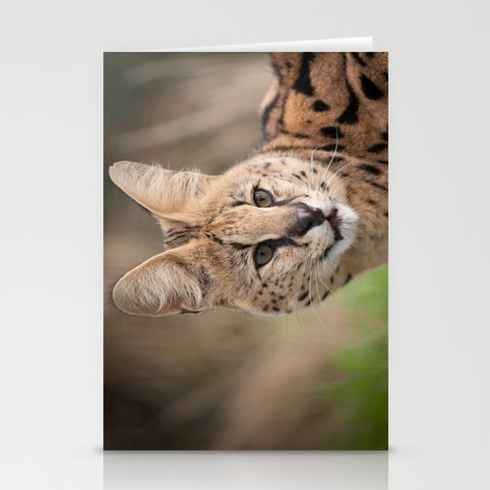 Serval Cat Stationery Cards