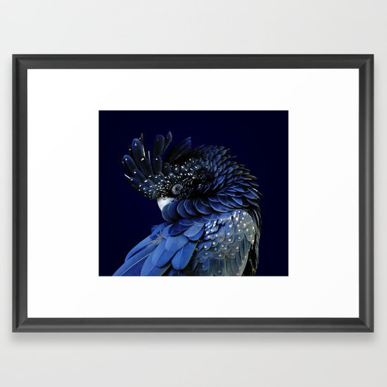 Australian Cockatoo Framed Print