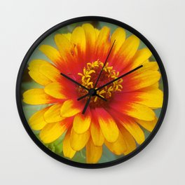 Zinnia on fire Wall Clock