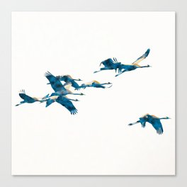 Beautiful Cranes in white background Canvas Print