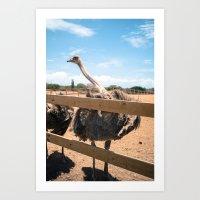 Ostrich pt 3 Art Print