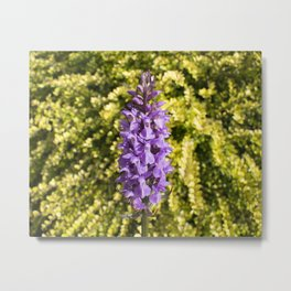 Southern Marsh Orchid Metal Print