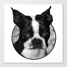 Boston Terrier Head Shot Canvas Print